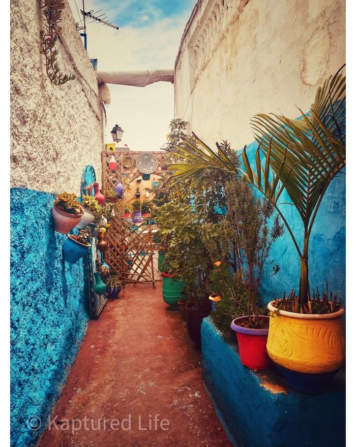 Plants Street