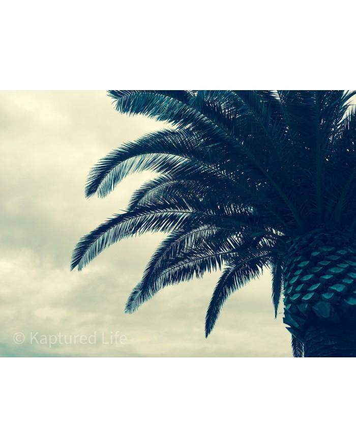 Palm tree scenario