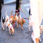 Walk on by 🐕🐩  #dogwalking #digitalphotography #streetphotography #lifestylephotography #lifestyle #dogphotography #capturemoments #diasec #fineartprints #digigraphie #limitededitionprints #artphotography #bekapt #kapturedlife